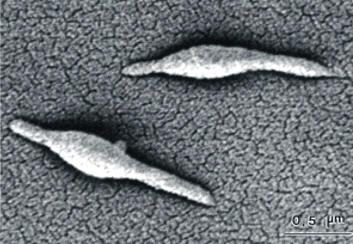 Скрытые половые инфекции: методы и способы лечения