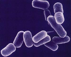 Чиновников обвинили во вспышке инфекции в югорской детской больнице