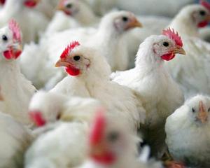 Заразиться птичьим гриппом можно в пяти странах