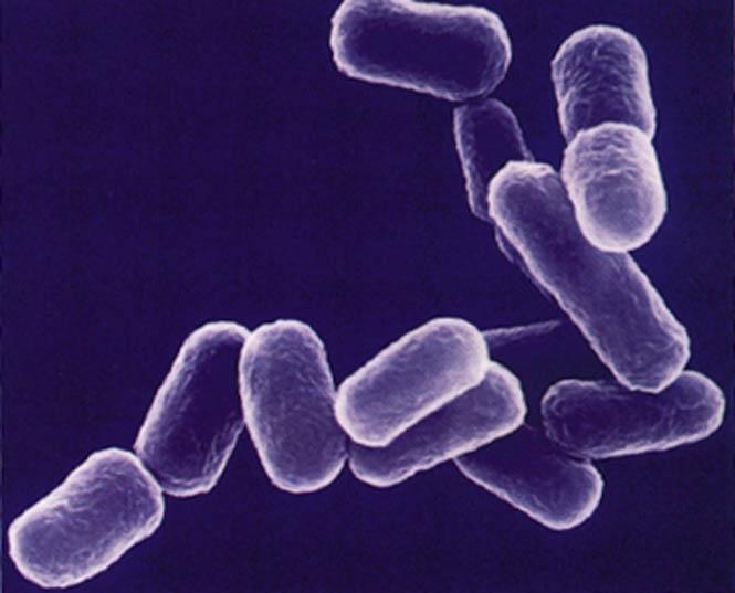 Растворяемые электронные имплантаты вылечат инфекции