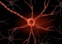 Нервы передают в мозг данные об инфекции