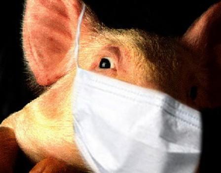 Больного свиным гриппом выявили в Кирове