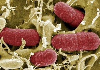 СМИ: в Великобритании вспышка супервируса может убить 80 000 человек