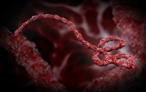 Чиханье может стать причиной заражения вирусом Эбола