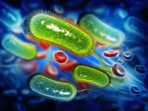 Экспериментальный препарат оказался эффективным против бактерий H.pylori