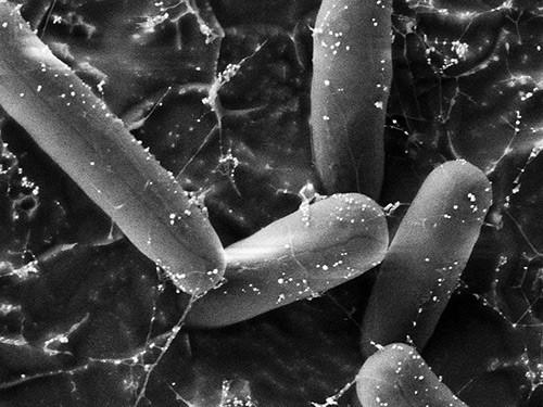 Наночастицы заменят антибиотики