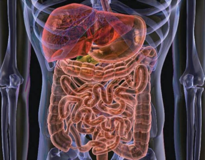 Кишечные бактерии могут вызывать депрессию