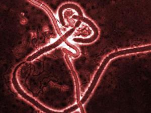 Сьерра-Леоне сняла карантин по лихорадке Эбола со всех населенных пунктов
