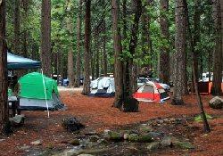 В национальном парке США обнаружены возбудители чумы
