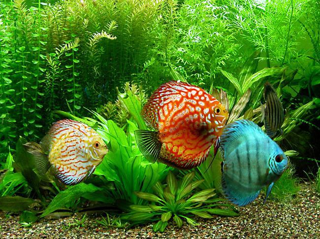 Как аквариумные рыбки лечат от депрессии?
