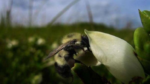Пчелы знают азы терапии