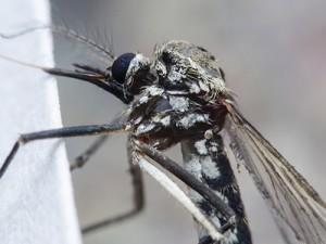 В Дели более 1800 человек заразились лихорадкой денге