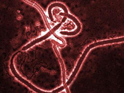 Клинические испытания новой вакцины от лихорадки Эбола