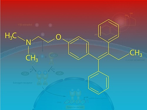 Тамоксифен борется не только с раком, но и с золотистым стафилококком