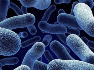 Бактерии способны чувствовать запахи среды обитания