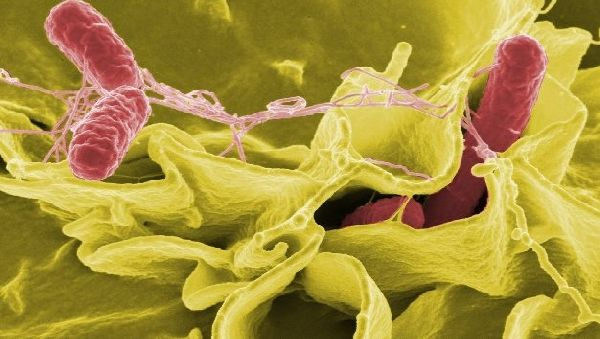 Инфекции можно победить даже без антибиотиков