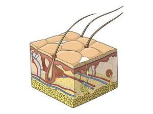 Более 90% вирусов кожи человека плохо изучены