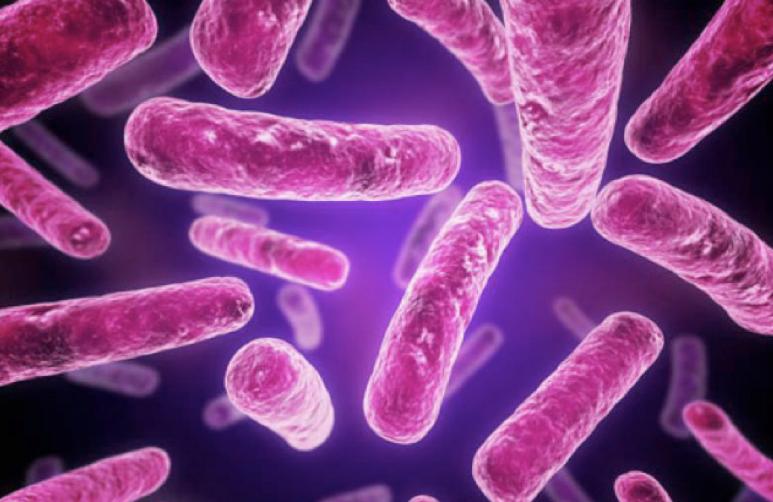 Обнаружены новые опасные бактерии