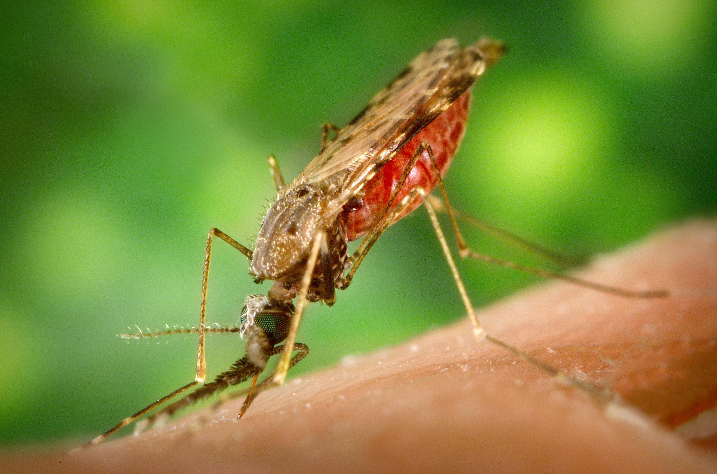 Ученые создадут новую вакцину от малярии