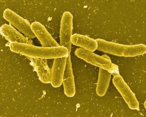 Сальмонеллез: опасное инфекционное заболевание