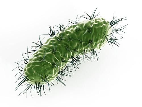 Бактерии, устойчивые к колистину, обнаружены и в Великобритании