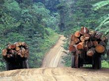 Распространение малярии связано с вырубкой лесов, показало исследование в Малайзии