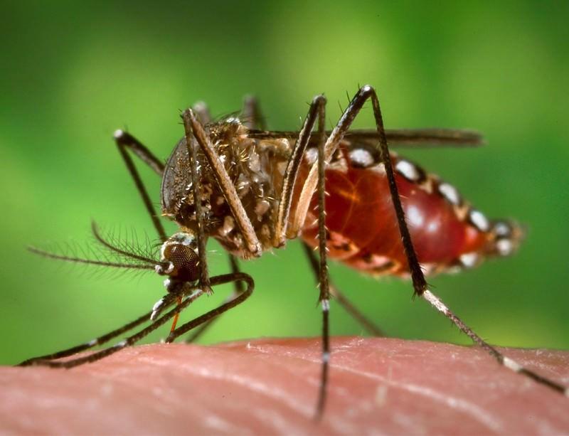 На Гаити официально признали эпидемию вируса Зика