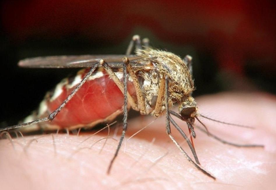 ВОЗ: вирус Зика может распространиться почти во всех странах Южной и Северной Америки