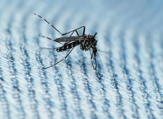 NIH займется исследованиями вакцины против лихорадки Зика