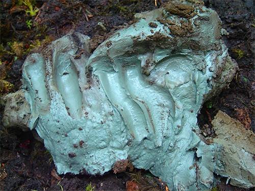 Голубая глина против госпитальных инфекций