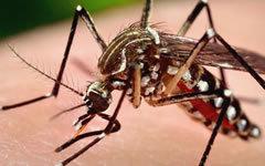 В МАГАТЭ предложили способ борьбы с распространением вируса Зика