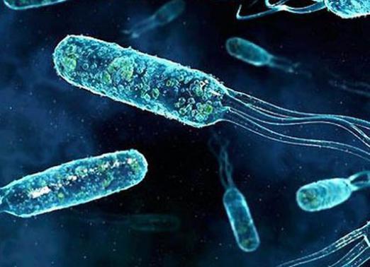 Учёные: Горожане часто болеют из-за недостатка природных микробов