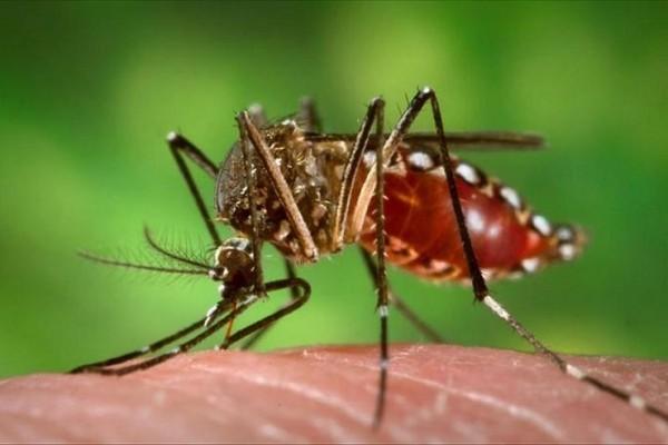 В США проверяют 14 возможных случаев заражения вирусом Зика