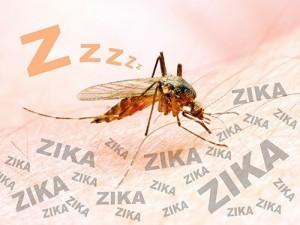 Китайские ученые расшифровали геном вируса Зика