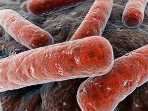 В Петербурге у работницы детсада обнаружили туберкулез