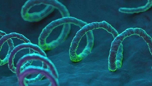 Франции угрожает сифилис