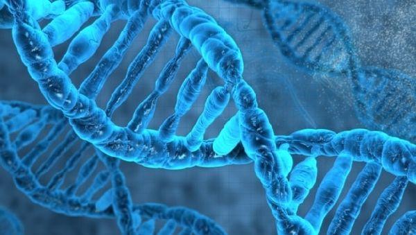 Монстр в человеческом геноме: древний ретровирус активен до сих пор