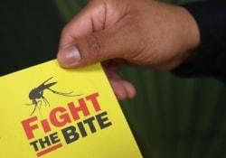 ВОЗ предупреждает о возможной вспышке лихорадки Зика в странах Европы