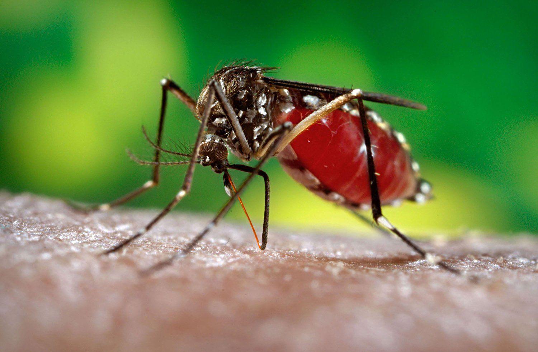 В Африке выявлен штамм вируса Зика, идентичный латиноамериканскому