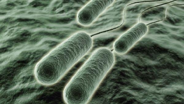 Раскрыт секрет лекарственной устойчивости бактерий