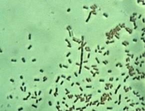 Резистенция бактерий: серьезная угроза