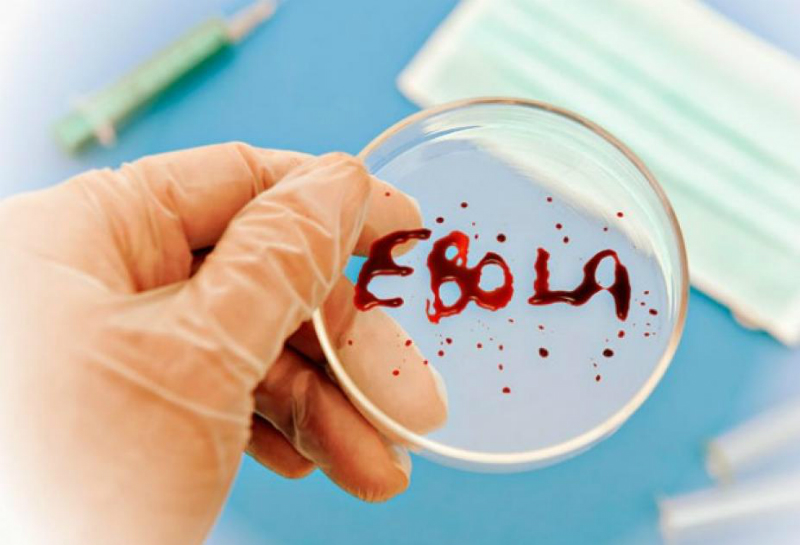 Ученые обнаружили растение, которое может побороть вирус Эбола