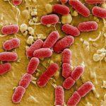 В США обнаружен второй случай заражения «супербактерией»