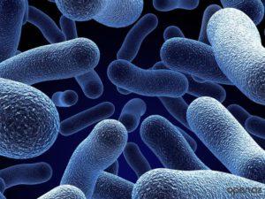 Минздрав предложил создать национальную коллекцию патогенных микроорганизмов