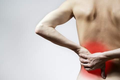 Спина – главная опора организма