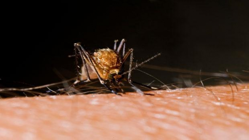 Вспышка вируса Зика завершится сама собой через три года