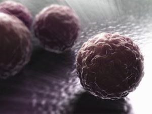 От хламидиоза защитит интраназальная вакцина