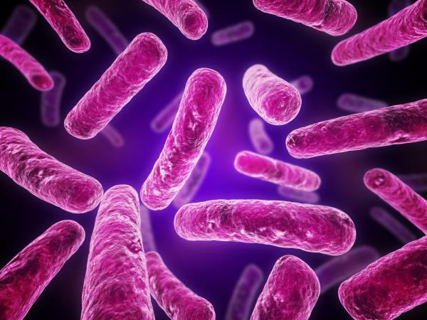 Хламидиоз повреждает гены