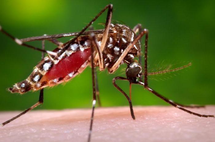 Жительница Москвы скончалась от тропической малярии