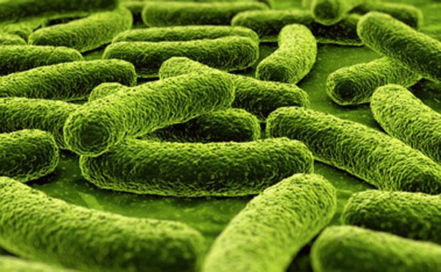 антибиотики против глистов
